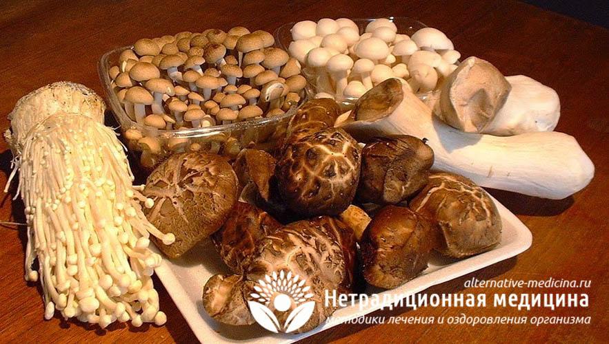 Фунготерапия - все про способы лечения лекарственными грибами