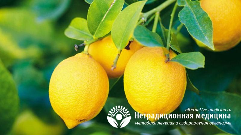 Чем полезен лимон для нашего организма