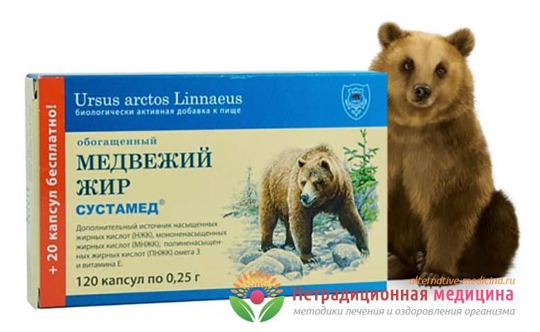 Медвежий жир - полезные свойства и рецепты применения
