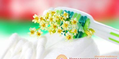 Миниатюра к статье Лечебные травы для зубов и десен — полезные рецепты фитотерапии