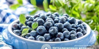 Миниатюра к статье Черника обыкновенная — полезные свойства ягоды и применение в медицине