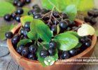 Миниатюра к статье Рябина черноплодная — натуральное природное средство от повышенного давления