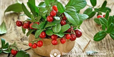 Миниатюра к статье Листья брусники — полезные свойства и рецепты применения в медицине