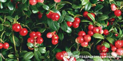 Миниатюра к статье Ягоды брусники — полезные свойства и секреты применения