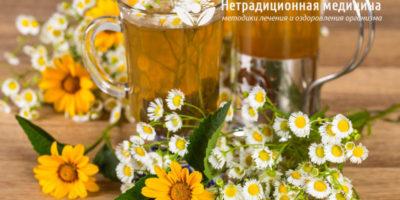 Миниатюра к статье Какие травы помогают при цистите — эффективные рецепты фитотерапии
