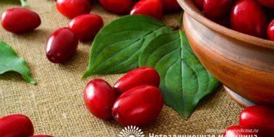 Миниатюра к статье Кизил — чем полезна кислая ягодка для нашего здоровья?