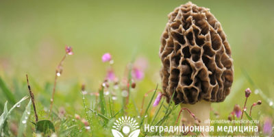 Миниатюра к статье Фунготерапия — все о том, как лечиться целебными грибами