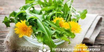 Миниатюра к статье Листья одуванчика — секреты применения вкусной и полезной зелени