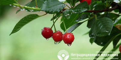 Миниатюра к статье Чем полезна вишня для здоровья человека — секреты сочной ягоды