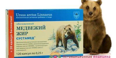 Миниатюра к статье Медвежий жир — полезные свойства и правила эффектвиного применения