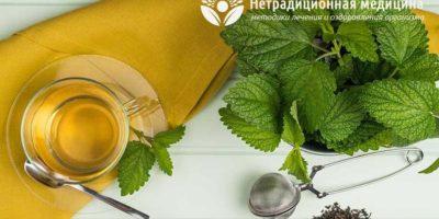 Миниатюра к статье Вкусный и полезный чай из мелиссы — рецепты приготовления и применения