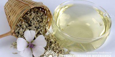 Миниатюра к статье Как использовать алтей при заболеваниях желудка — рецепты фитотерапии