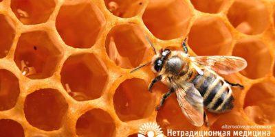 Миниатюра к статье Пчелиный воск — все про свойства и применение уникального продукта пчеловодства