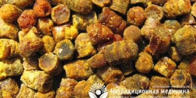 Миниатюра к статье Перга — уникальные свойства пчелиного хлеба для нашего здоровья