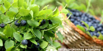 Миниатюра к статье Листья и побеги черники — полезные свойства и рецепты приготовления