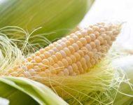 Миниатюра к статье Кукурузные рыльца для лечения печени - рецепты эффективного применения