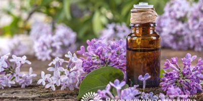 Миниатюра к статье Сирень  — ароматное растение для лечения болезней суставов