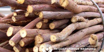 Миниатюра к статье Как применять корень солодки от кашля правильно и эффективно?