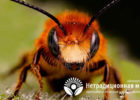 Миниатюра к статье Апитерапия  —   эффективная методика лечения болезней продуктами пчеловодства