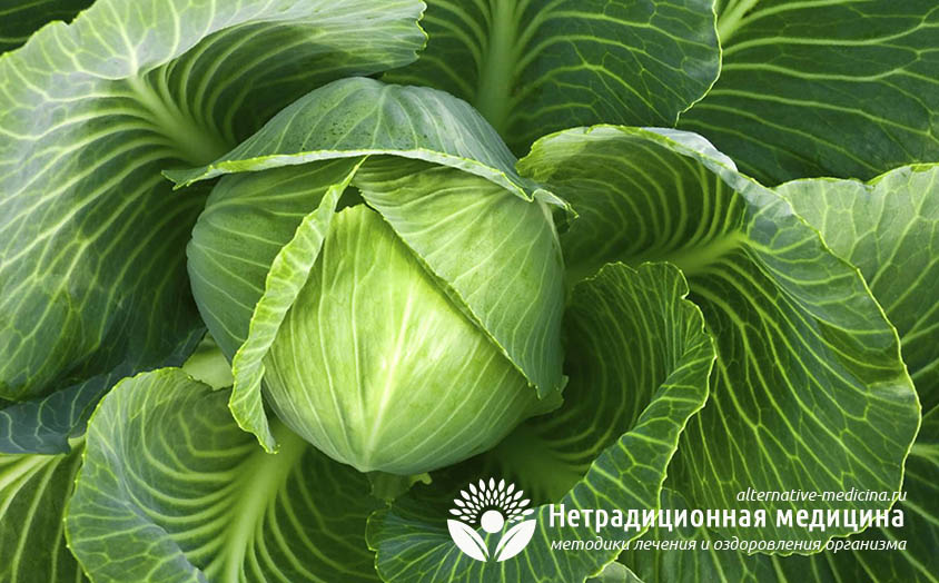 Капустный лист – лечебные свойства