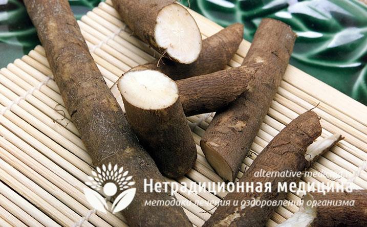 Лопух — свойства и применение корня лопуха в народной медицине