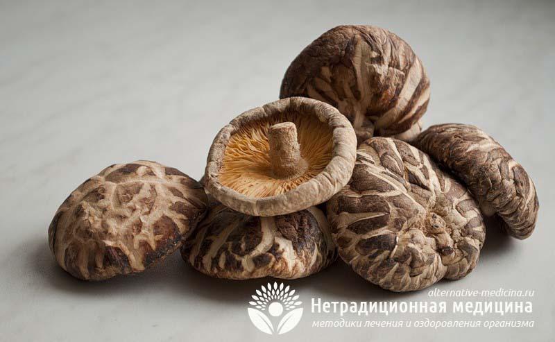 Польза гриба шиитаке для здоровья: лечение.