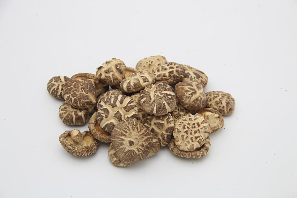 лечебный гриб Шиитаке