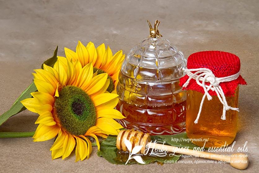 Полезные свойства меда из подсолнечника и противопоказания по его применению