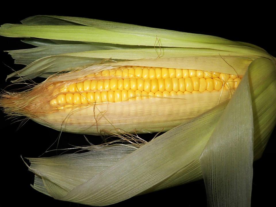 кукурузные рыльца для печени