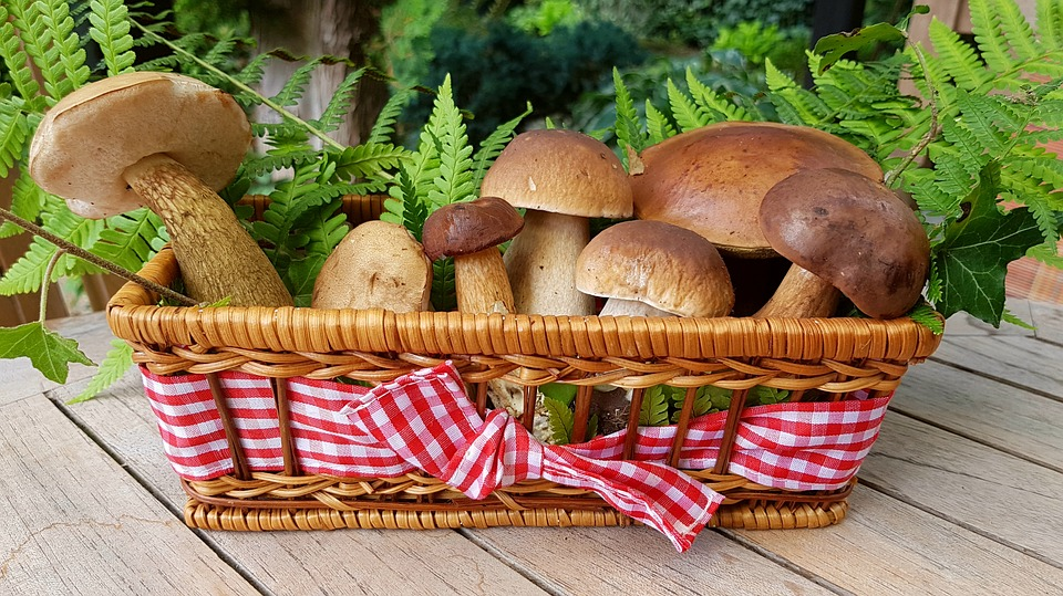 Чем полезны лесные грибы
