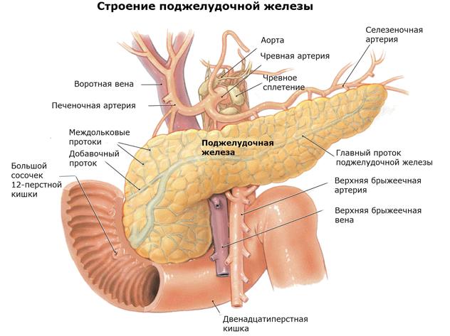 как питаться при заболеваниях поджелудочной железы