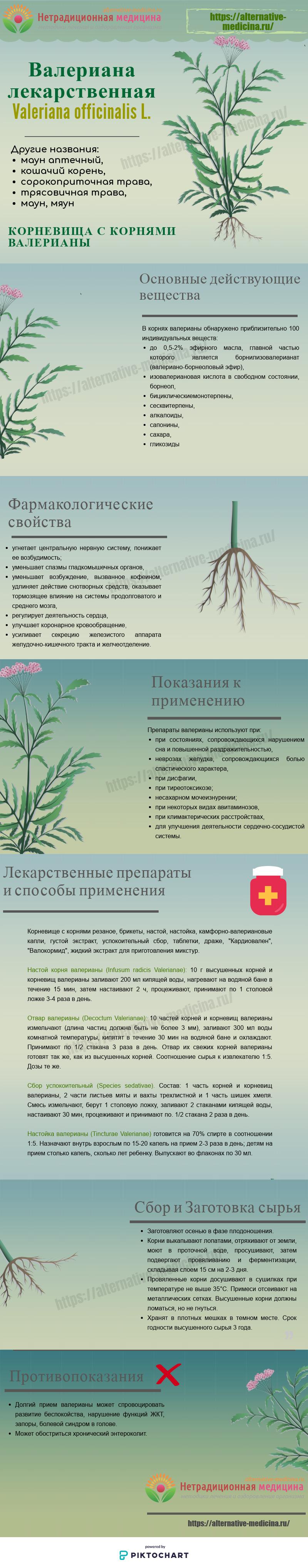 корни валерианы