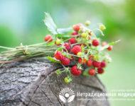 Миниатюра к статье Листья земляники - полезные свойства  и рецепты применения