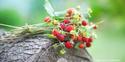 Миниатюра к статье Листья земляники – полезные свойства  и рецепты применения