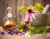 Миниатюра к статье Эхинацея пурпурная  - лекарственная трава для повышения иммунитета