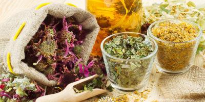Миниатюра к статье Какие травы помогают при цистите – эффективные рецепты фитотерапии