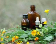 Миниатюра к статье Цветки календулы – панацея для лечения больного горла