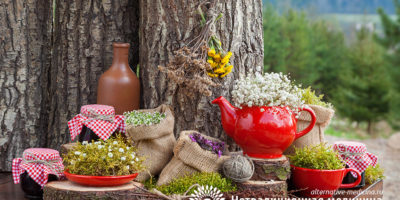 Миниатюра к статье Фитотерапия – все про особенности лечения лекарственными растениями