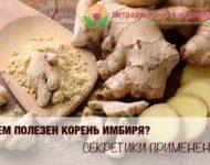 Миниатюра к статье Имбирь - полезные свойства и рецепты применения имбирного корня
