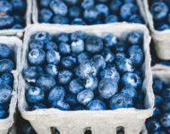Миниатюра к статье Черника обыкновенная  - полезные свойства ягоды и применение в медицине