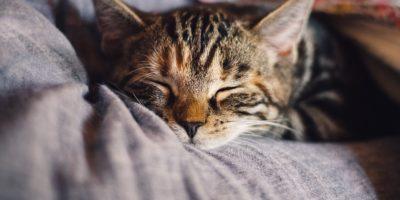 Миниатюра к статье Анималотерапия или как лечат животные различные заболевания