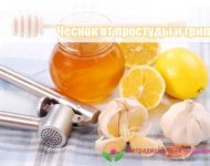Миниатюра к статье Как применять чеснок при простуде правильно и эффективно - полезные рецепты