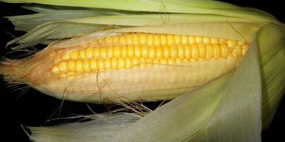 Миниатюра к статье Кукурузные рыльца для лечения печени – рецепты эффективного применения