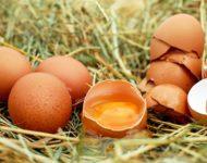 Миниатюра к статье Невероятные свойства яичной скорлупы для здоровья человека - рецепты применения