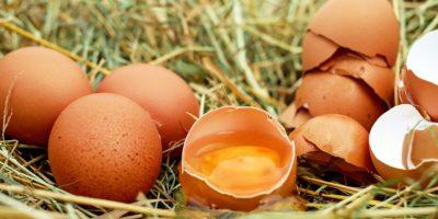 Миниатюра к статье Невероятные свойства яичной скорлупы для здоровья человека – рецепты применения