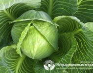 Миниатюра к статье Как лечиться капустным листом правильно и эффективно?