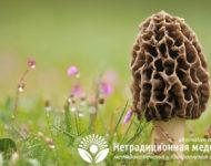 Миниатюра к статье Фунготерапия  - все о том, как лечиться целебными грибами