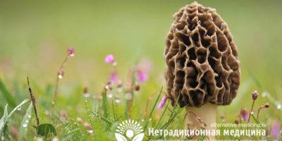 Миниатюра к статье Фунготерапия  – все о том, как лечиться целебными грибами