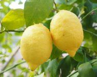 Миниатюра к статье Чем полезен лимон для нашего организма  - секреты употребления