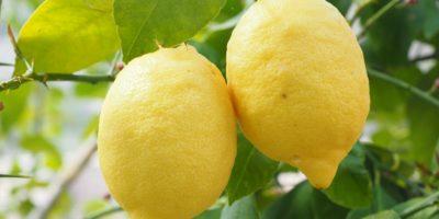 Миниатюра к статье Чем полезен лимон для нашего организма  – секреты употребления